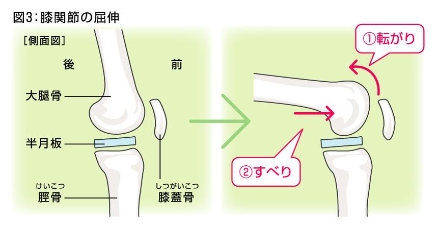 「膝関節 屈伸」の画像検索結果