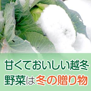 甘くて美味しい越冬野菜は冬の贈り物